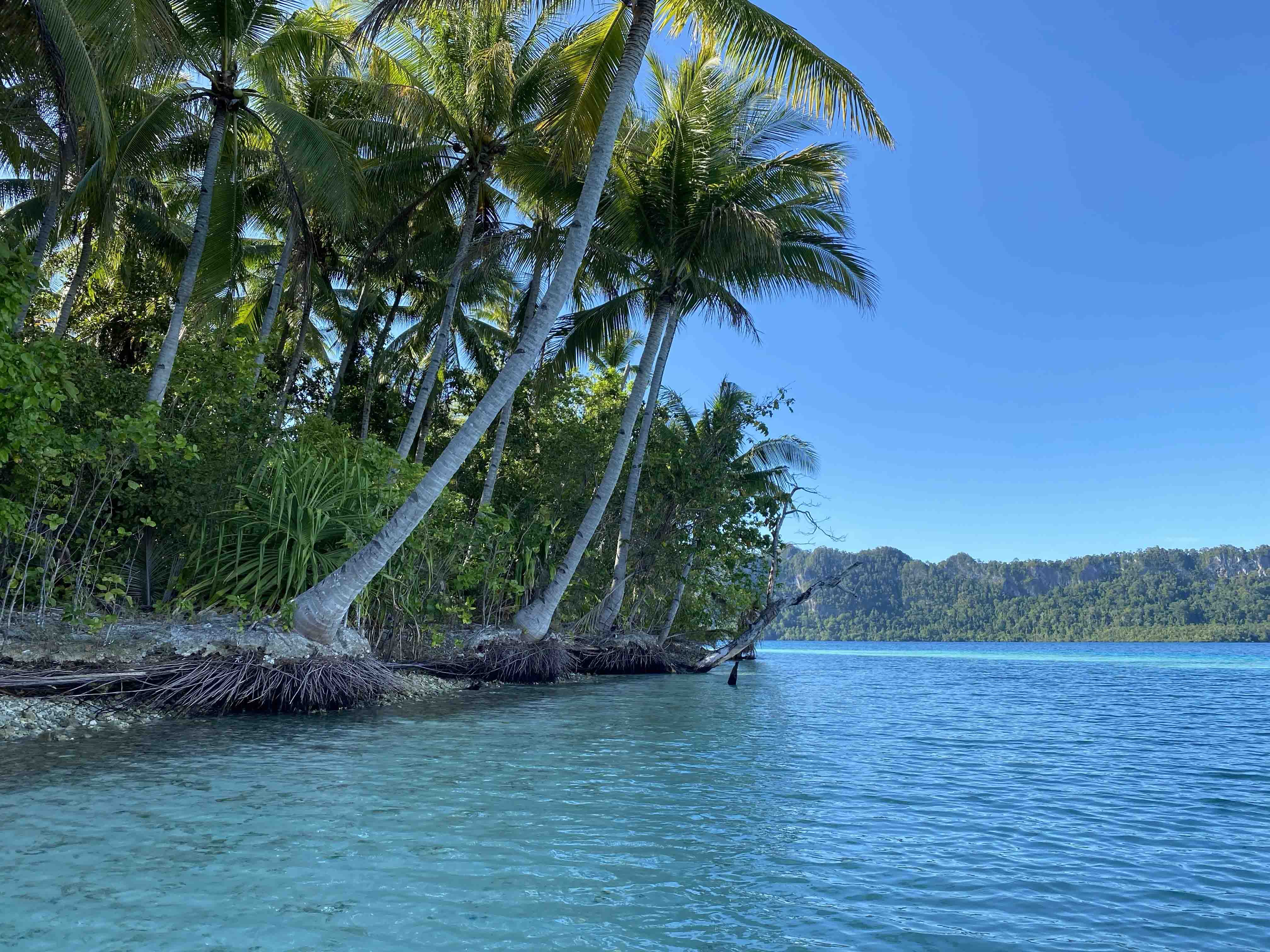 The Papua New Guinea coastline